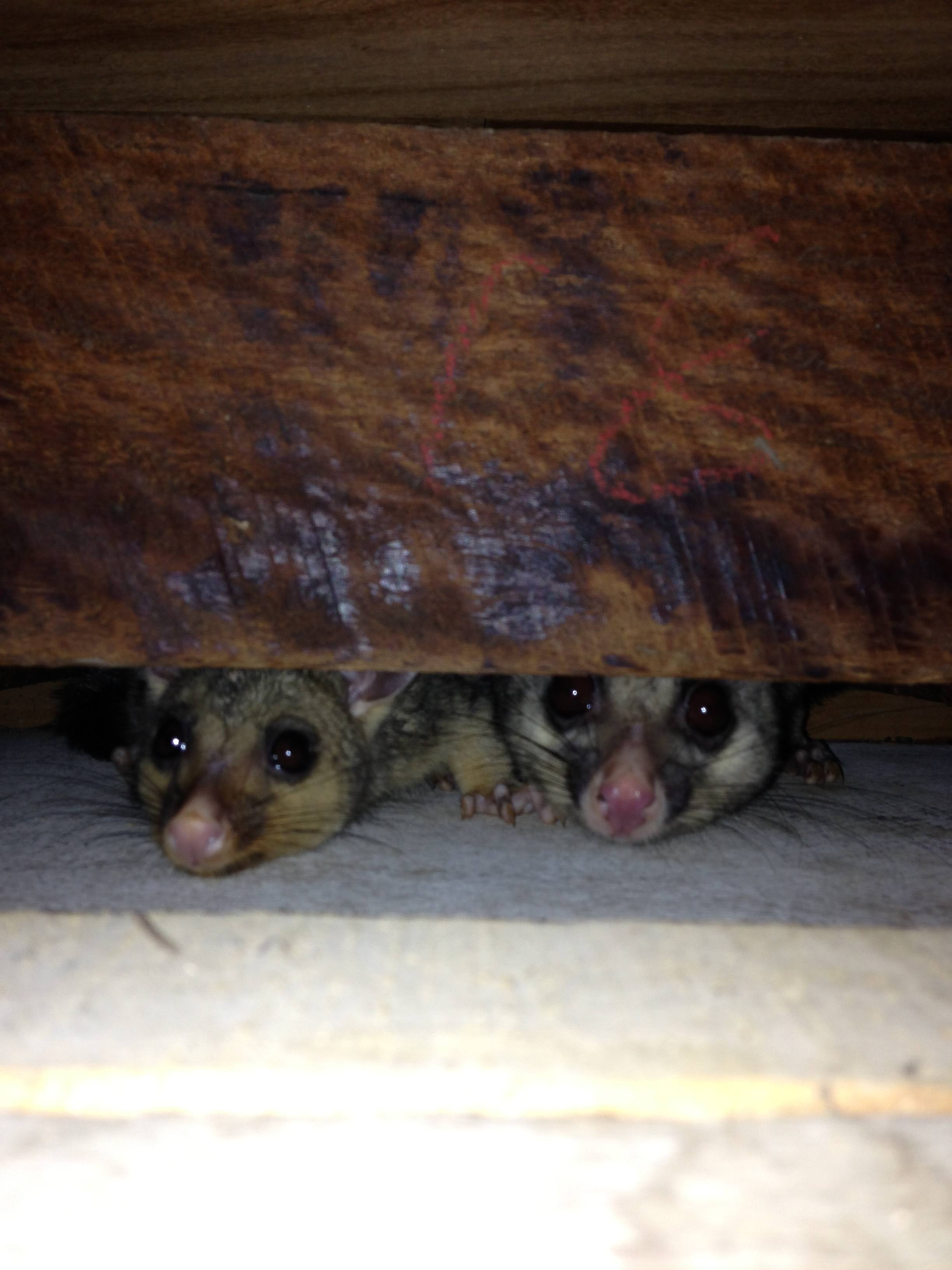 possum proofing to prevent possums entering